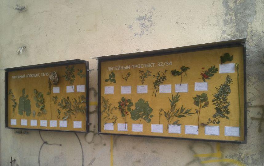 В 2017 году художник Александр Морозов создал гербарий дворов Литейного проспекта. Жители сами собирали листья и приносили их художнику.